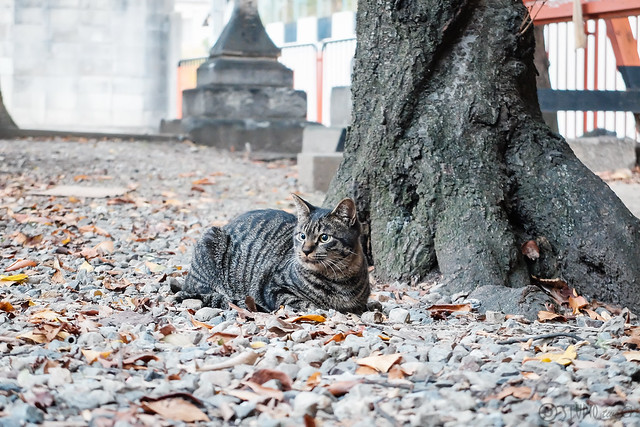 Today's Cat@2014-10-26