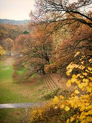 Slottskogen bredvid hoppbacken (Zarako) Tags: park autumn gothenburg slottsskogen