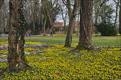 Winterlinge im Schlosspark Ostrau (p h o t o . w o r l d s) Tags: schlosspark ostrau winterlinge frühblüher natur nature sigmadp2m