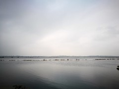 Fifty shades of grey (gerrygoal2008) Tags: fifty shades grey landscape water sky marshes flood overflooded river douve liesville normandy winter