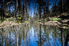 The World upside down (*Capture the Moment* (OFF till End June)) Tags: 2017 bavaria bayern birches birke birken bäume elemente filzn fotowalk germany himmel landschaften matthias natur nature reflexion sky sonya7m2 sonya7mii sonya7mark2 sonya7ii sonyfe1635mmf4zaoss sonyilce7m2 spiegelung trees wasser water