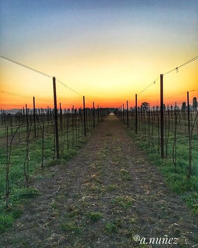 #BuonGiorno #SpringSeason2017 #WorkPlace #WineYard #WineFarm #FVG #Italy 03/04/2017