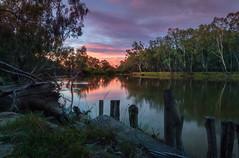 A while longer (jenni 101) Tags: victoriaaustralia 1452 52weekchallange australia australiansunset murrayriver rivergums rellections river sunset
