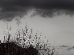 Complice (its_anjali) Tags: autumn branches rami bare monochrome sky cielo clouds photoshop express