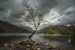 The Lone Tree, Llyn Padarn, Llanberis (Mark Hollis Photography) Tags: llyn padarn llanberis north wales long exposure nikon d7100 manfrotto lee filters big stopper