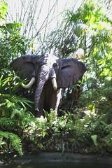 Jungle Cruise Elephant (joeclin) Tags: amateur elephant junglecruise magickingdom waltdisneyworld themepark color outdoor iphoneography appleiphone7 baylake orl orlando fl florida usa unitedstates northamerica