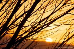 Sun Rolling Downhill (Johan Konz) Tags: winter sunset orange sky clouds rural trees outdoor landscape atmosphere nikon d90 purmerland waterland netherlands tree sun silhouette bokeh