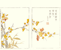 Wintersweet (Japanese Flower and Bird Art) Tags: flower wintersweet chimonanthus praecox calycanthaceae shumboku ooka kano woodblock picture book japan japanese art readercollection