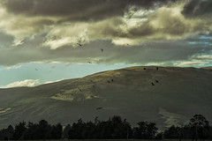 The birds know (Ian@NZFlickr) Tags: birds sky clouds near sunset mungatuas driving otago nz real notadded