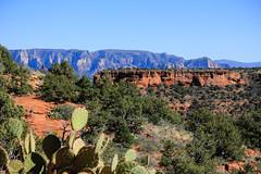 Caminata / hike - Bear Mountain - Arizona (Mike's Mode (Miguel H.)) Tags: sedona bearmountain caminata cactus cacto rocas roja senderismo flores plantas yucca opuntia echinocereus pediocactus