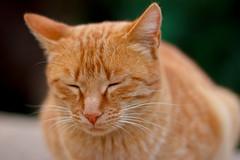 Nap (Artun York) Tags: gato spain granada alhambra nap kedi portre portrait 50mm canon 550d canon550d canon50mm18stm 50mm18stm photography