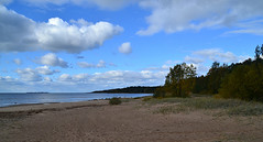Forested seashore (МирославСтаменов) Tags: petersburg tarkhovka baltics sea seashore sand beach forest taiga cloudscape autumn sky margin horizon
