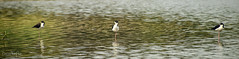 Laguna Manialtepec (458) (Danni Thompson) Tags: travel backpacker mexico october 2015 lagoon wetland bird wildlife