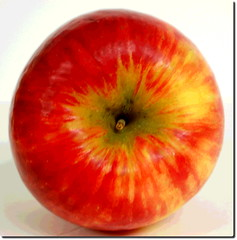 Honeycrisp (Rene' Slack) Tags: macro tulips spring apple shiraz slackadventure