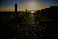 The path to the sea (A Costigan) Tags: fencefriday fence sunlight sunrise dawn path lambayisland dublin ireland irish camhino canon eos irishsea outdoor