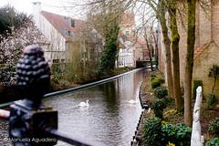 #cisnes #swans #2016 #brujas #brugge #bruges #bélgica #belgium #animal #ave #bird #ciudad #city #viajar #travel #viaje #trip #puente #bridge #canal #channel #agua #water #reflejos #reflexes #photography #photographer #picoftheday #sonystas #sonyalpha #son (Manuela Aguadero) Tags: trip brujas bridge city sonystas 2016 reflexes water sonya350 ciudad animal puente brugge bélgica viajar cisnes channel picoftheday belgium swans photography bird sonyalpha sonyalpha350 ave reflejos photographer alpha350 agua bruges canal viaje travel