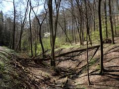 Erstes Grün (onnola) Tags: koblenz rheinlandpfalz deutschland rhinelandpalatinate germany arzheimerwald wintersborn wald forest frühling spring buchenwald laubwald
