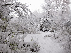 IMG_2834 (sjj62) Tags: s90 snow snowscape lith lakeinthehillsil winter winterscape