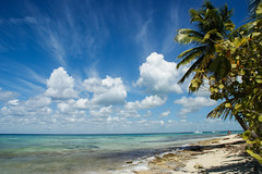 Seeview (lusza1) Tags: see dominicana shore palms paradise sky