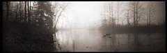Ondurama Daybreak # 1 (DRCPhoto) Tags: ondu ondurama 6x17 pinhole lenslessphotography panoramic kodakbw400cn cheatriver westvirginia
