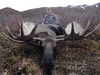Alaska Dall Sheep Hunt & Moose Hunt 7