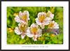 Flower-Collection-Fine-Art-DSC_2666 (fatima_suljagic) Tags: fineartprints fatimasuljagicmelbourne flowers photographermelbourne canvasprints photoprints photographicservices nature naturephotographer melbourne australia