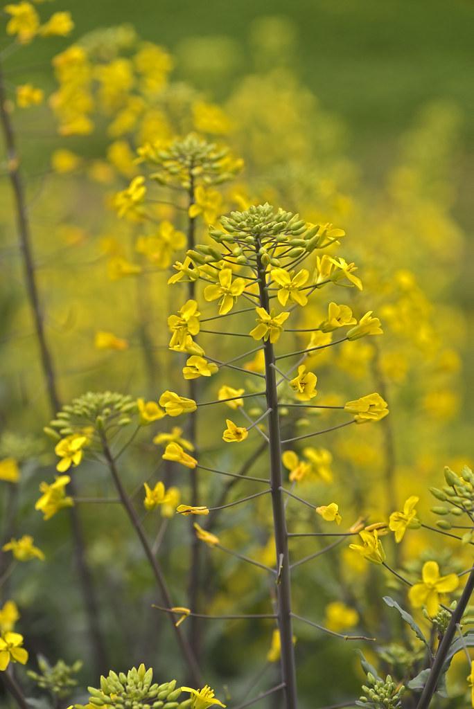 Best Natural Silica Fertilizer