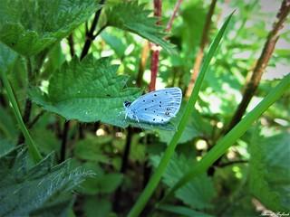 Butterfly 1215