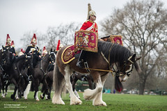 QUEENS CAVALRY READY FOR SUMMER OF CEREMONIAL (Defence Images) Tags: ceremonial occasion horse animal soldiers identifiable personnel helmet headwear plumedhelmet jackboots breastplate silvercuirasses army regiments thehouseholdcavalry thehouseholdcavalrymountedregiment hcmrd location london equipment clothing drumhorse militarymusic defence defense uk british military londondistrict unitedkingdom gbr