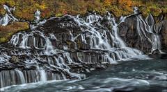 Hraunfossar 2 (Jen St. Louis) Tags: autumn river landscape lava waterfall iceland waterfalls hdr fallcolours hraunfossar nikon1685mm nikond7000 jenstlouisphotography wwwjenstlouisphotographycom