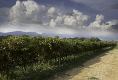 Edra Vineyard, Huesca Spain (beckstei) Tags: blue sky mountain mountains nature clouds landscape spain huesca cumulus aragon pyrenees zaragosa mallos anies rigelos ayerba