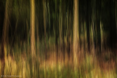 Natures Flames (Andy Hough Photography) Tags: trees england abstract art unitedkingdom sony icm a77 littlewittenham sonyalpha andyhough intentionalcameramovement slta77 littlewittenhamwood andyhoughphotography