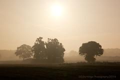 Sunrise (Steven586) Tags: morning autumn trees sun mist tree silhouette canon oak norfolk contrejour eos60d