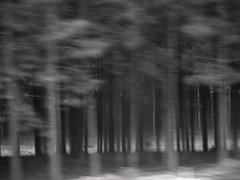 (Mei Todd) Tags: road trip trees blur car movement blurry blurred