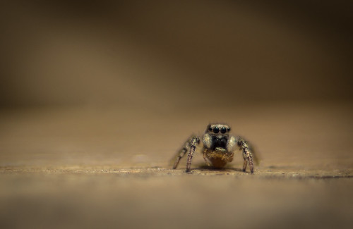 Small Spider