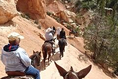 P9080343 (bluegrass0839) Tags: canyon national hoodoo bryce zion zionnationalpark brycecanyon nationalparks narrows hoodoos horsebackride parkthe