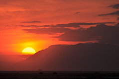 Amboseli Sunset (Ashwati Vipin - Back after hiatus) Tags: africa travel sunset orange sun holiday animals silhouette clouds photography nikon skies kenya wildlife safari savannah colourful wildebeest herbivore eastafrica africansafari wildsafari nikonusers sunsetcolours sunsetskies d5000 sunsethues nikond5000