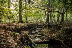 Kleiner Bach im Rheinbacher Wald (And Hei) Tags: fall germany wasser herbst eifel bach wald bltter bume rheinbach