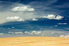 After Harvest (www.toddklassy.com) Tags: travel blue summer sky sunlight colour nature beautiful field weather yellow horizontal clouds rural season landscape sadness gold scenery montana solitude alone mt bright farm stripes empty wheat horizon country hill grain dream harvest seed dramatic straw surreal nobody scene dreaming clean growth fantasy rows crop simplicity backgrounds environment prairie copyspace agriculture minimalism molt dramaticsky idyllic cloudscape stubble broadview greatplains wheatfield stockphotography royaltyfree agribusiness colorimage ruralscene organicfarming nonurbanscene cerealplant montanafarming wheatstubble rollinglandscape horizonoverland montanalandscape montanawheatfield