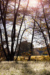 Sunset (rabindahouse) Tags: sunset robin cool herbst tau grn makro pilze wald moos morgens behr 2014 rab kleeblatt indahouse kleebltter tonkina