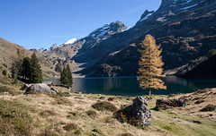 IMG_9917 (Der Sonnenanbeter) Tags: lake mountains alps tree landscape schweiz switzerland see swiss berge alpen landschaft baum