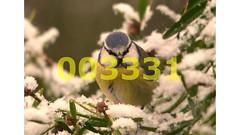 Flickr_003331 (lima_ho_htc) Tags: blue bird birds tit ngc gardenbirds naturethroughthelens franbanks rememberthatmomentlevel4 rememberthatmomentlevel1 rememberthatmomentlevel2 rememberthatmomentlevel3 rememberthatmomentlevel9 rememberthatmomentlevel5 rememberthatmomentlevel6 rememberthatmomentlevel10
