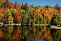 Algonquin Fall-3129 (RG Rutkay) Tags: autumn reflection fall nature landscape outdoors colours algonquinpark boreal marylake moskoka tdpcoutting