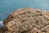 Entorno del mirador del faro de Salou (Joaquim F. P.) Tags: caminoderonda camíderonda catalunya cataluña costa españa mar mediterráneo mirador nikon playa roca spain tarragona turismo vacaciones naturaleza natura nature espanya mediterraneangoldencoast costadorada salou costadaurada