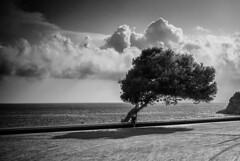 The one. f13; 1/640s; ISO 100: FL:50mm  Juan Manuel Saenz de Santa Mara, 2014 (Brenus) Tags: original trees en white black blanco landscape arboles y negro photographers paisaje fotografia impresiones tumblr lensblr
