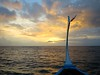 To Infinity (pass_) Tags: sea sunrise canon boat flag wave maldives dhoni g1x