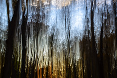 Enchanted Forest (Rh+) Tags: longexposure sunset abstract nature forest movement iowa