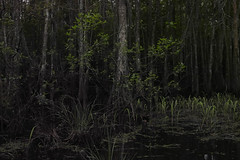 BAYOU #11 (David Picchiottino) Tags: trip light shadow usa tree mississippi landscape mood tennessee south neworleans bayou feeling nola fromtrain