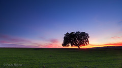 Alentejo twilight (P_Rocha) Tags: tree portugal twilight crepusculo alentejo plain planície azinheira