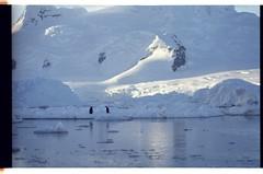 1998_12-007-01-G (becklectic) Tags: bird penguin antarctica 1998 views100 antarcticpenninsula worldtrekker